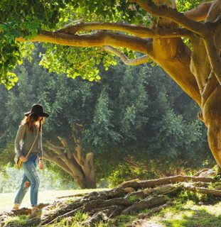 Chica bajo un árbol