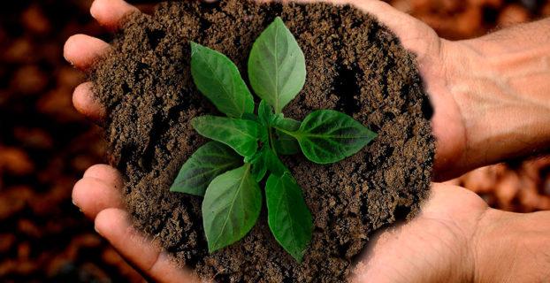 Planta entre las manos